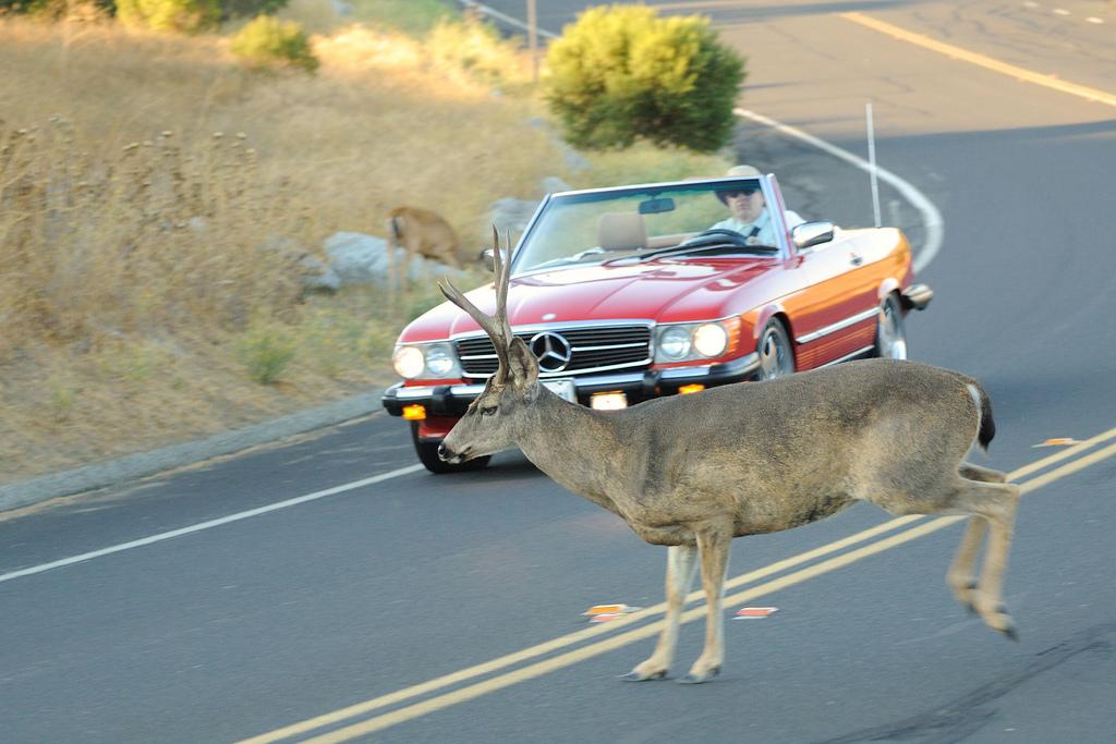 Deer  --  flickr user donjd2