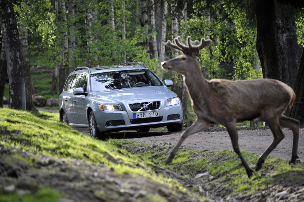 Volvo Using Pedestrian Detection System To Spot Animals, Too
