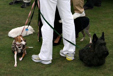 Dogs at Pebble Beach