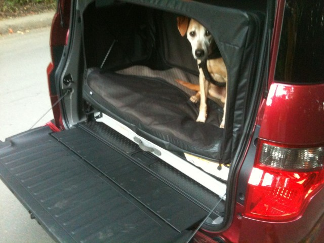 Honda Element Dog-Friendly package