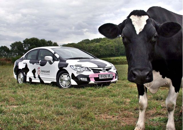 Honda Civic Cow