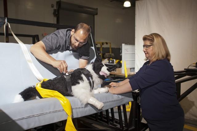 Testing in-car pet restraints