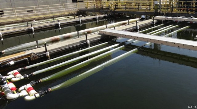 Wastewater & biofuel algae circulate through floating photobioreactors at San Francisco plant / NASA
