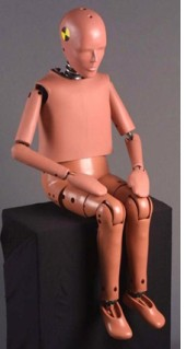 NHTSA - 10-year-old child crash test dummy