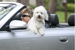 Unrestrained dog in car