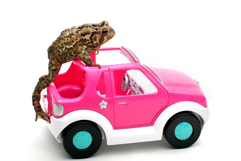 Tesla's Elon Musk Says Plug-In Hybrid Cars Are, Ummmm, Frogs