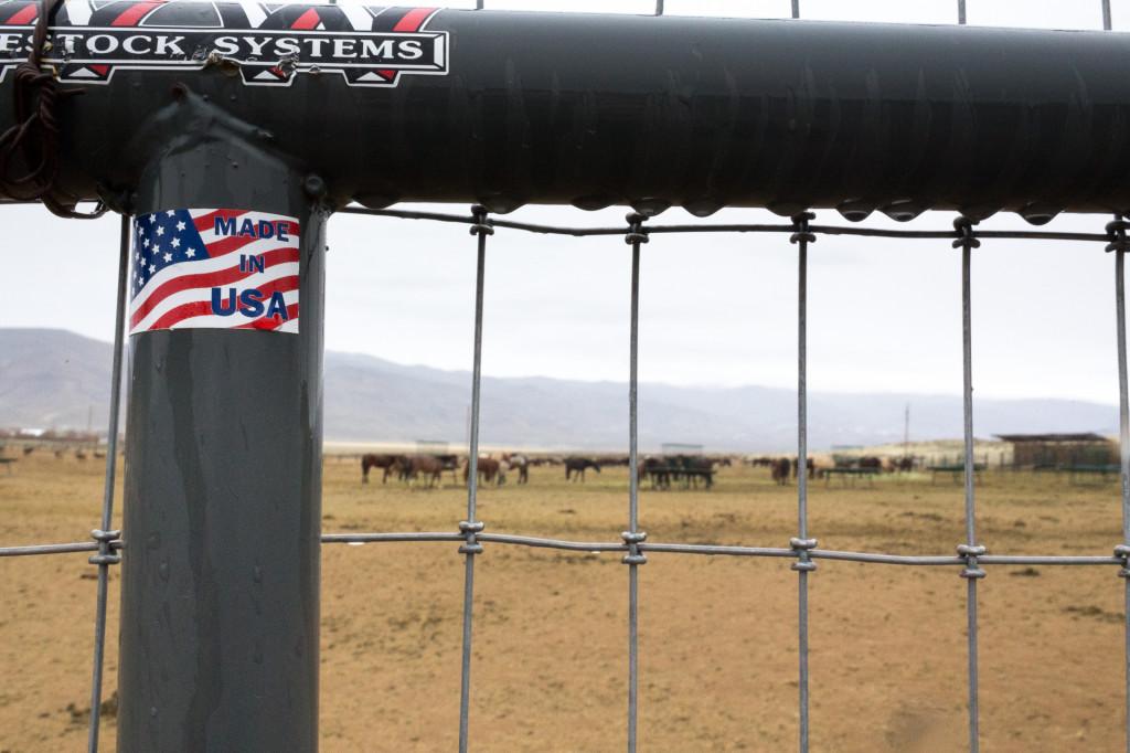 Palomino Valley fences keep hundreds of horses ready for adoption