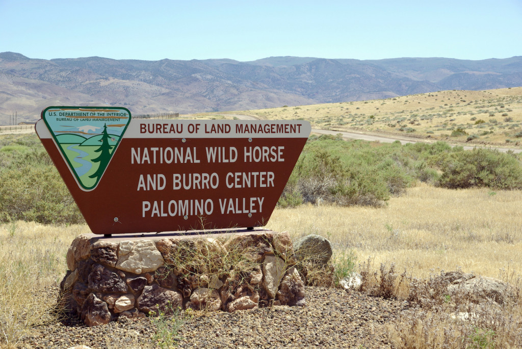 Palomino Valley houses hundreds of burros and mustangs just a dozen miles outside Reno