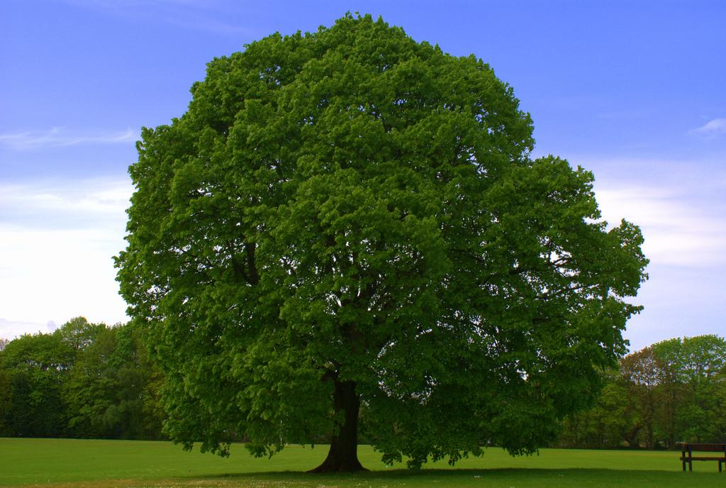 Tree [Image: Flickr user Ward.]