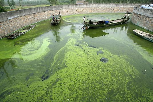 Algae [source: VentureBeat]