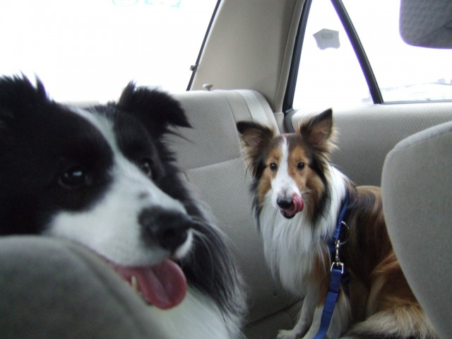 'Beau & Coda in the Car' by Nicole Engard on Flickr