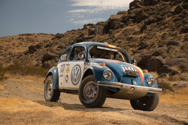 "Beetles can become ""Baja Bugs'"