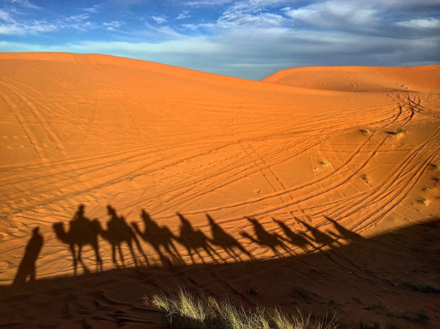 Camels, tire tracks, and dunes in Morocco
