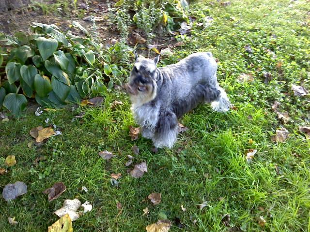 Ask TCC helps Stephen Stricklin and his Schnauzers choose among new SUVs.