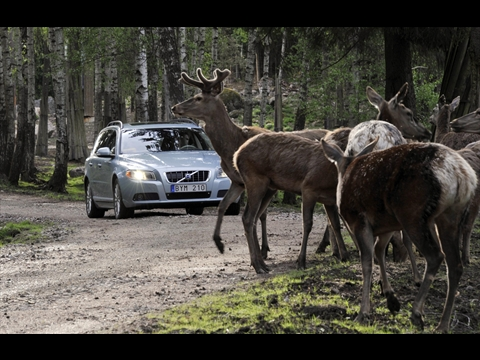 Volvo animal avoidance system