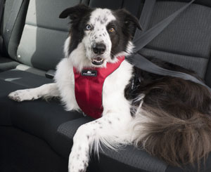 Image result for dog seat belts and harnesses