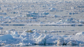 Polar Bear on Arctic sea ice [Credit: AWeith - Wikimedia Commons]