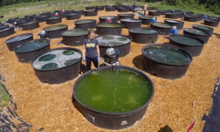 University of Michigan algae biodiesel project